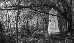 """Archived vestiges"" di Maisie McNeice – 1 aprile"